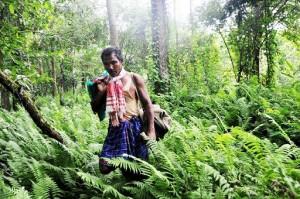 Jadav Payeng Walking through the Forest he Created. Image Courtesy: paperblog.com